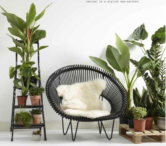 Comment cr er une ambiance tropicale pour l t for Grandes plantes vertes